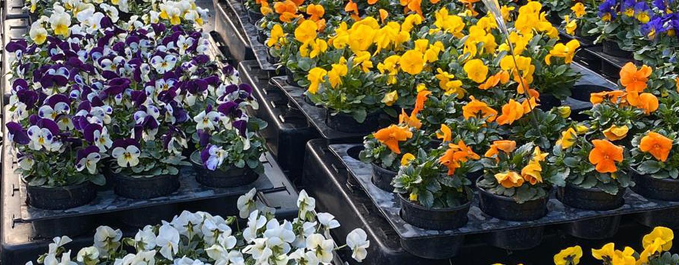 Saisonales - Blumen Damerius