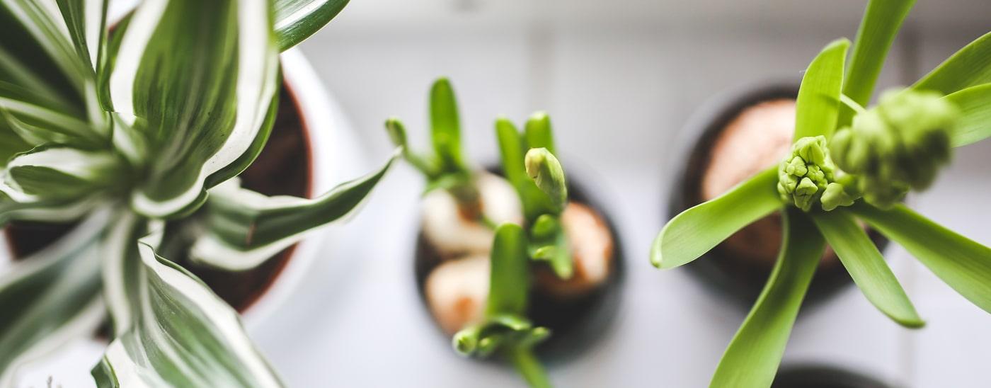 Zimmerpflanzen - Blumen Damerius